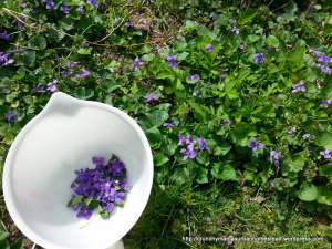 Collecting Violets